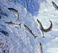 Our Mission | FutureFish